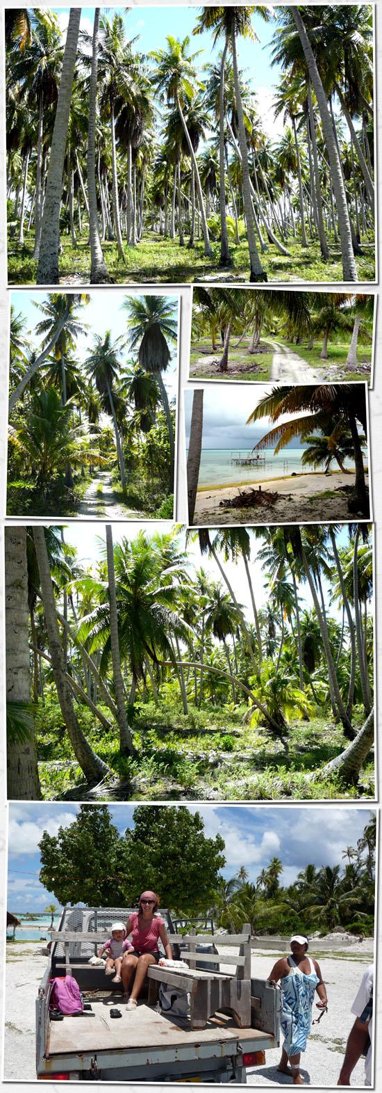 végétation sur l'atoll
